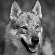 Wolfiii